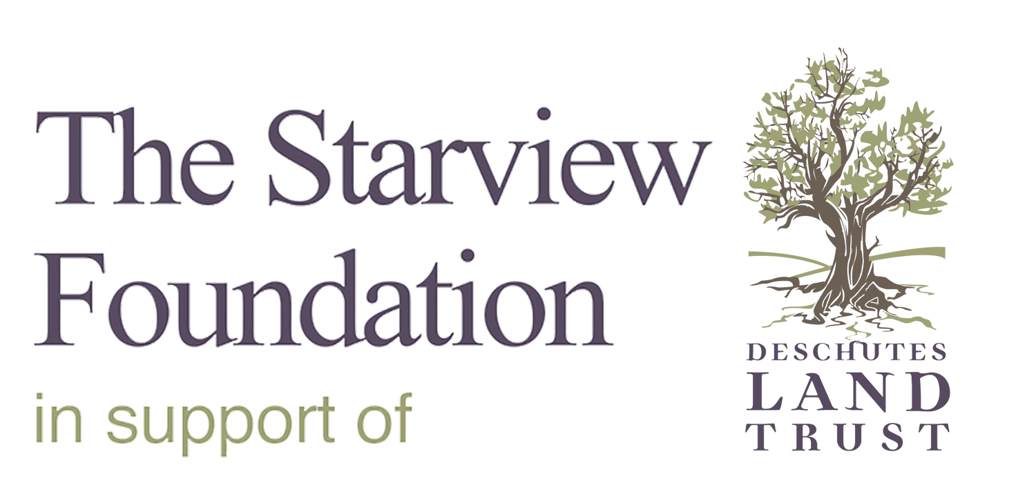 The Starview Foundation